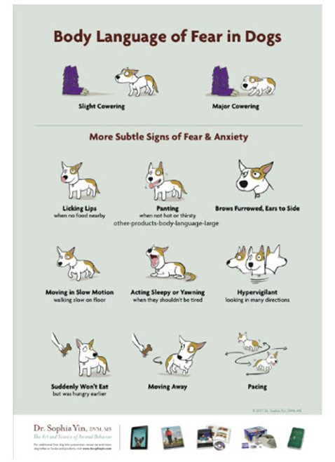 Body Language Of Fear In Dogs 100 Sheet Handout