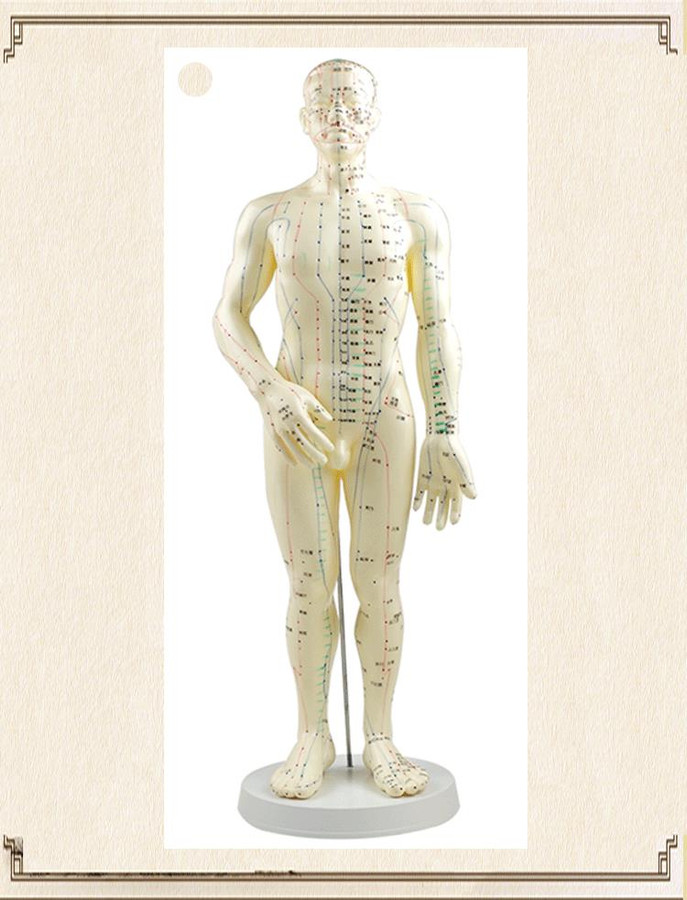 "20"" HUMAN ACUPUNCTURE MODEL"