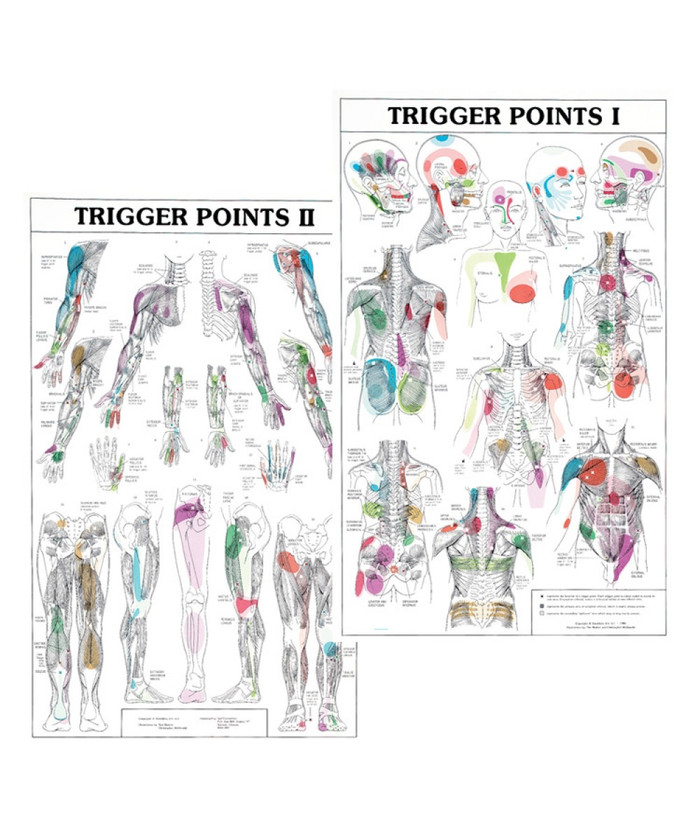 "TRIGGER POINT CHART SET-2 LAMINATED CHARTS 21"" X 34"""