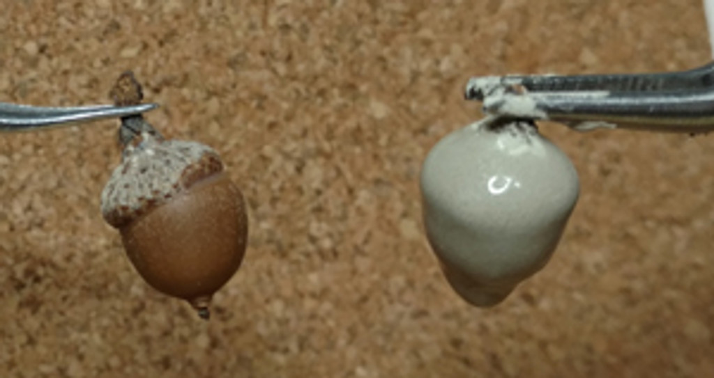 Natural Acorn (left) and Natural Acorn with silver clay (right)