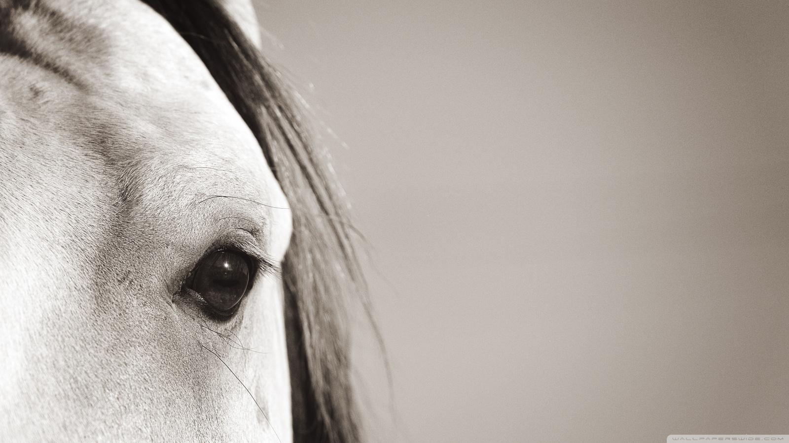 Grey Horse Head
