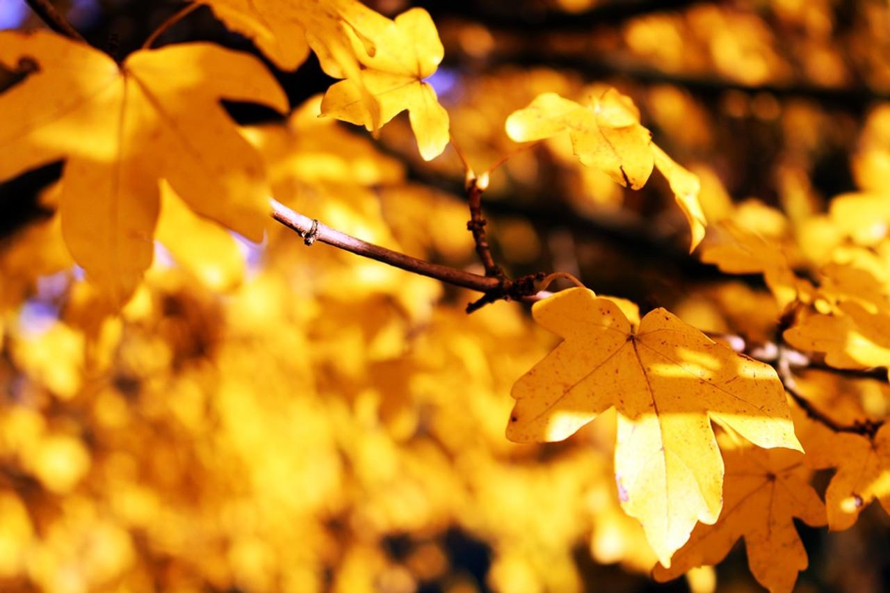 Hamptons Sun's Favorite Fall Festivities