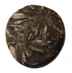 Chrysanthemum Stone is a stone of good fortune, harmony and change – Free info on healing meanings and how to use with purchase – Free shipping over $60.