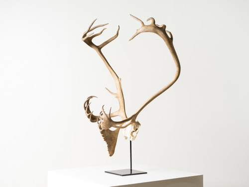 ANTLER ON STEEL STAND