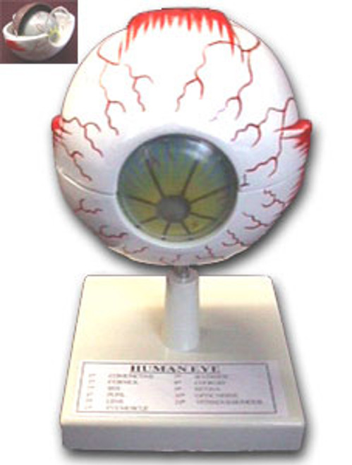 Model of the Eye