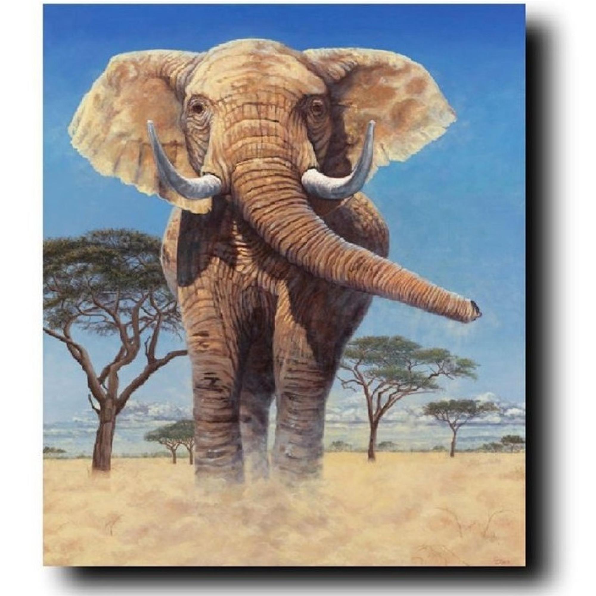 elephan print stand your ground gary jonson