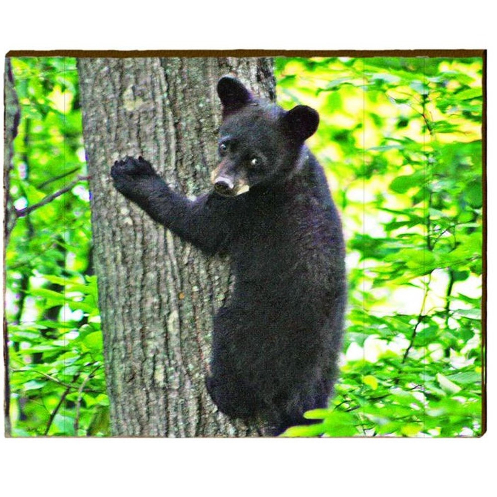 Black Bear Cub In Tree Wood Art | 30x24 |Mill Wood Art