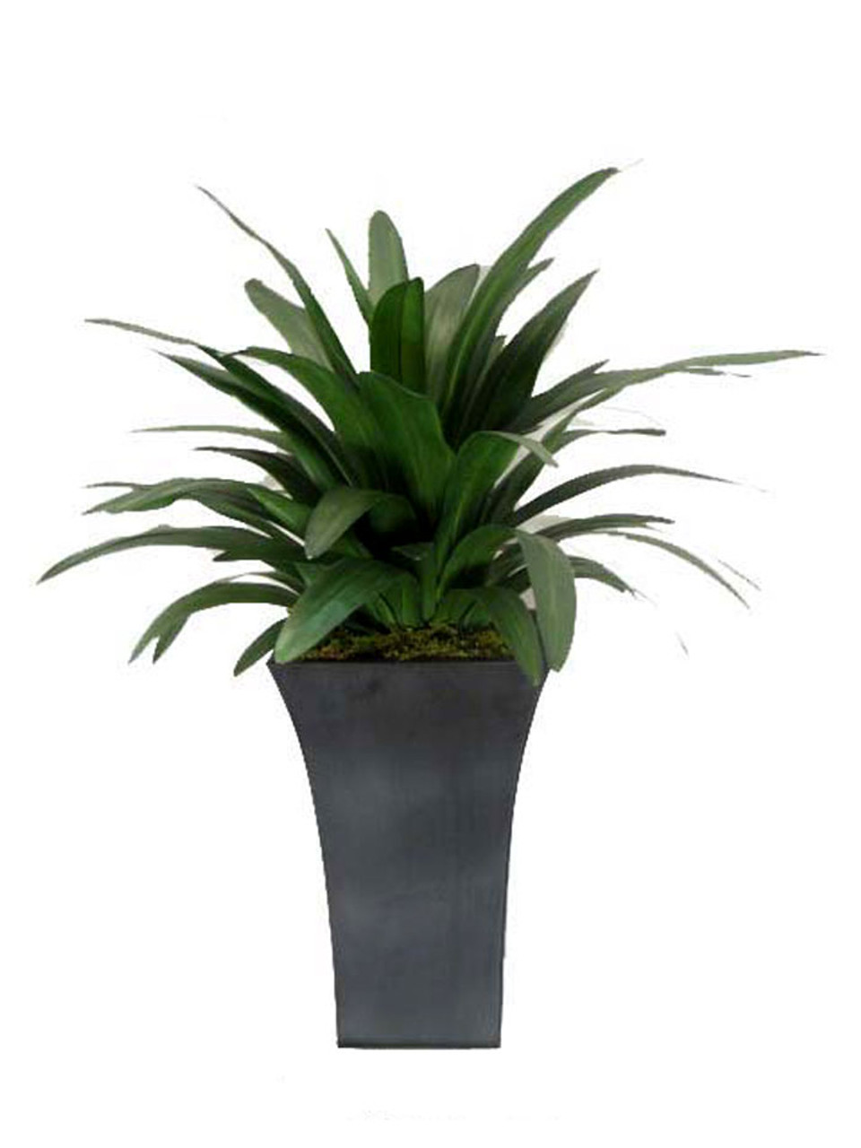 Amaryllis Plant In 11x11x17 Zinc Container Creative