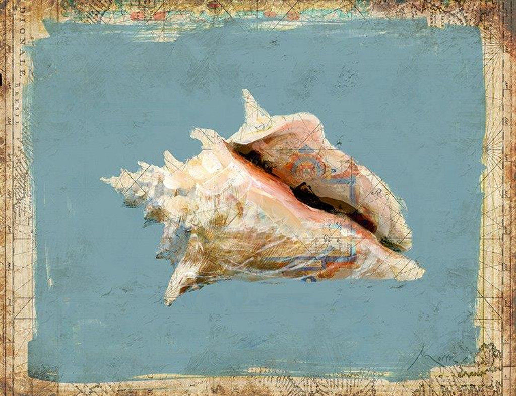 Conch Shell by Anthony Morrow