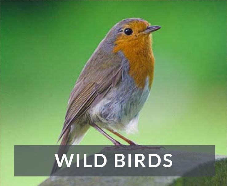 love-wildbirdsv2.jpg