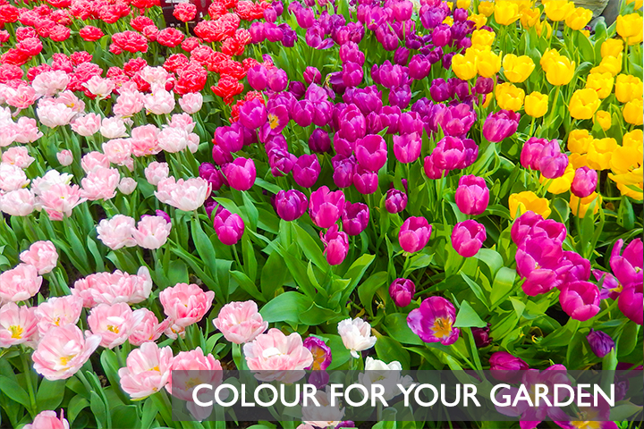 colourforyourgarden-1-.jpg