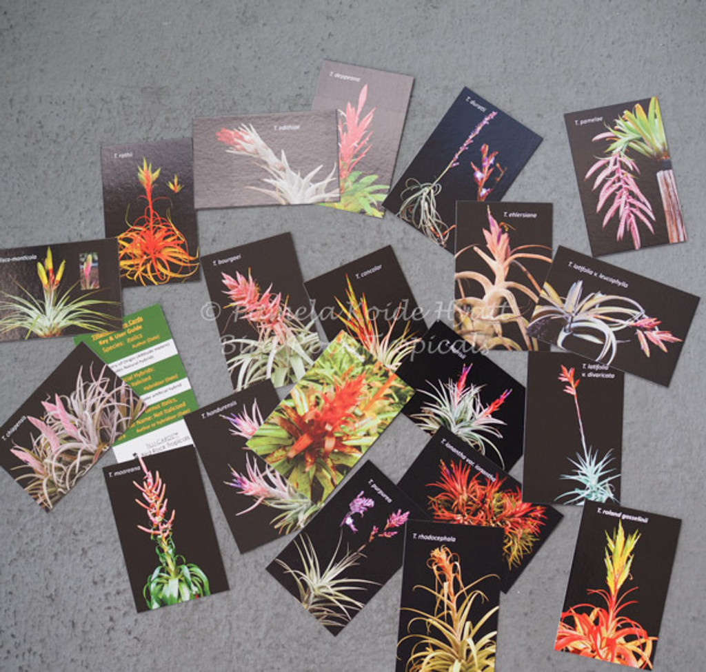 Tilli-Cards
