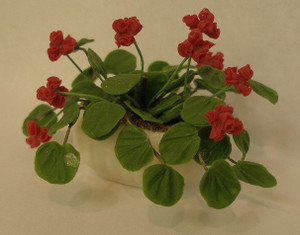 2149 - Hanging Plant - Geranium