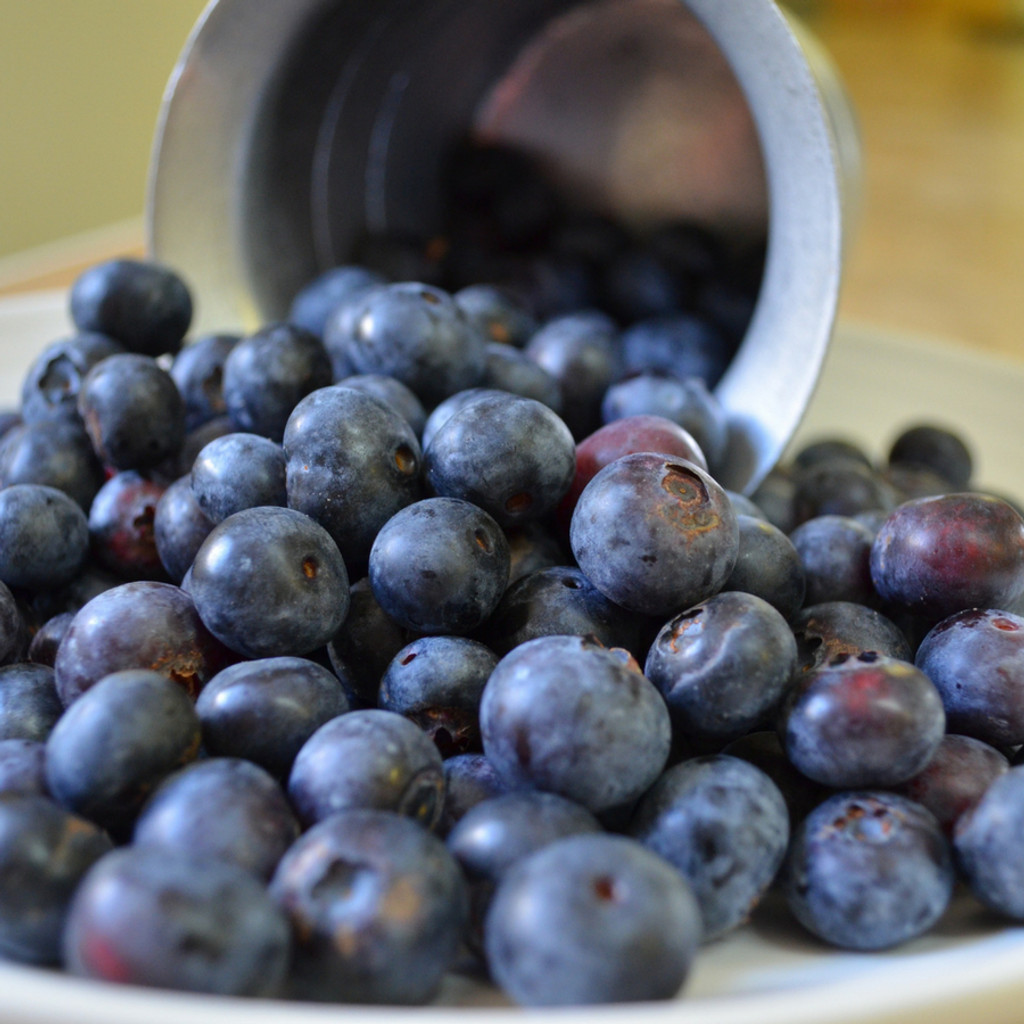 Koinonia Farm Fresh Blueberries Close-up
