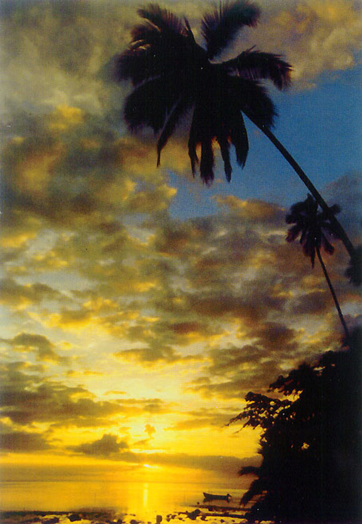 P574 - Palm Reef Sunset Postcard 50 Pack