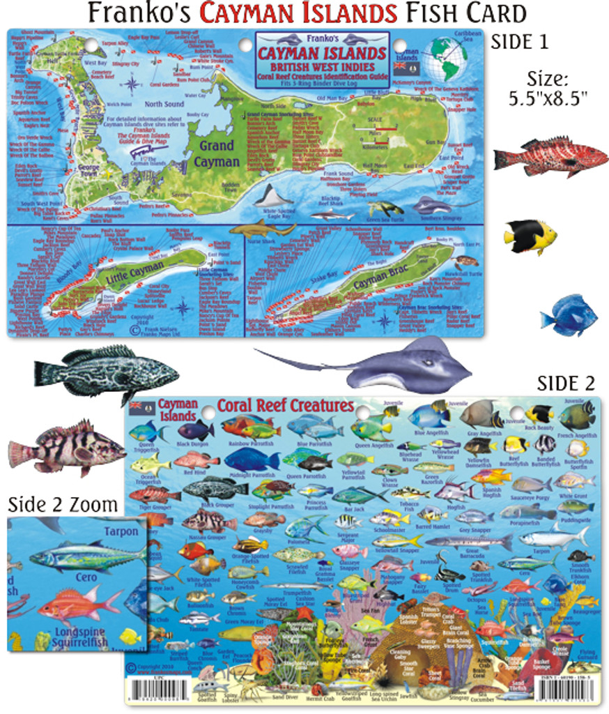 Cayman Islands Mini-Map and Reef Creatures Identification Guide (Fish Card)
