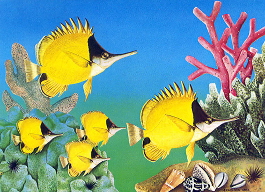 Christmas Cards - Coral Cards - C0443 / Tropical Fish / 10 cards per box