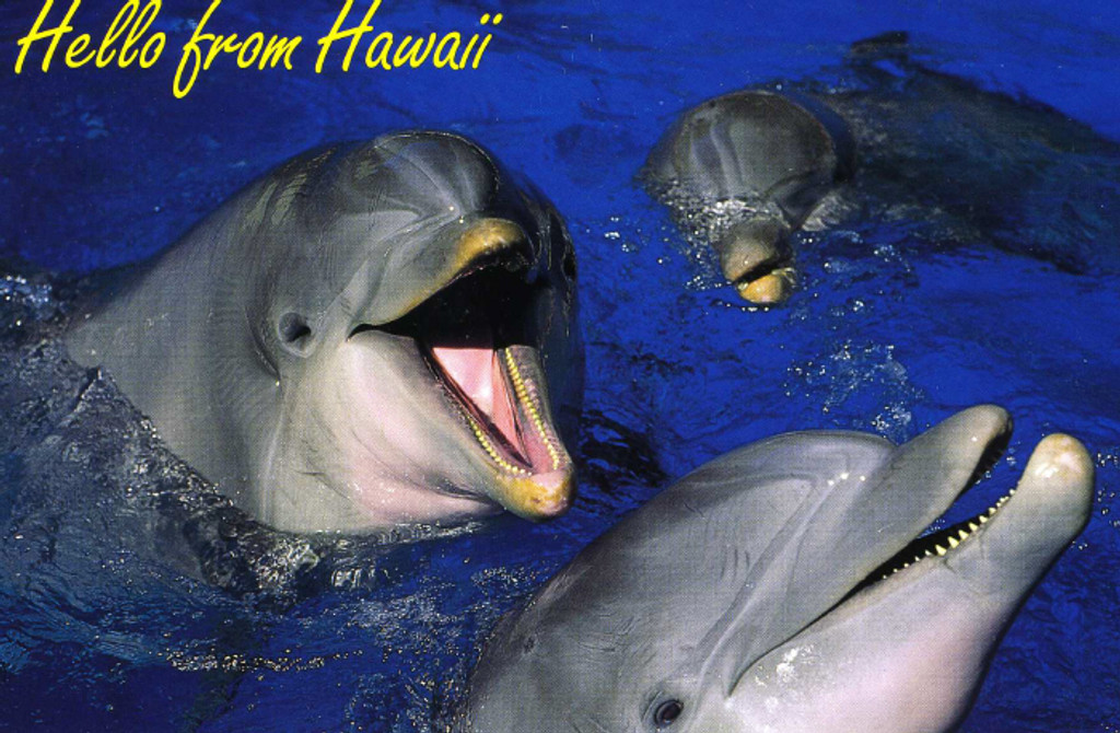 P806 - Happy Dolphins Postcard 50 Pack