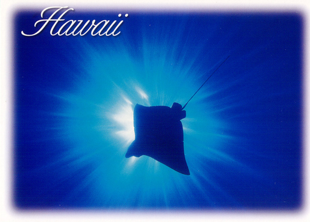 P052 - Manta Ray Flight Postcard 50 Pack