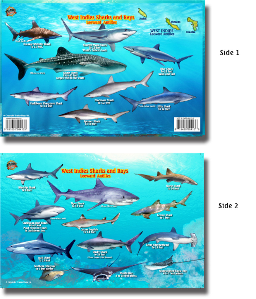 West Indies Sharks and Rays Card