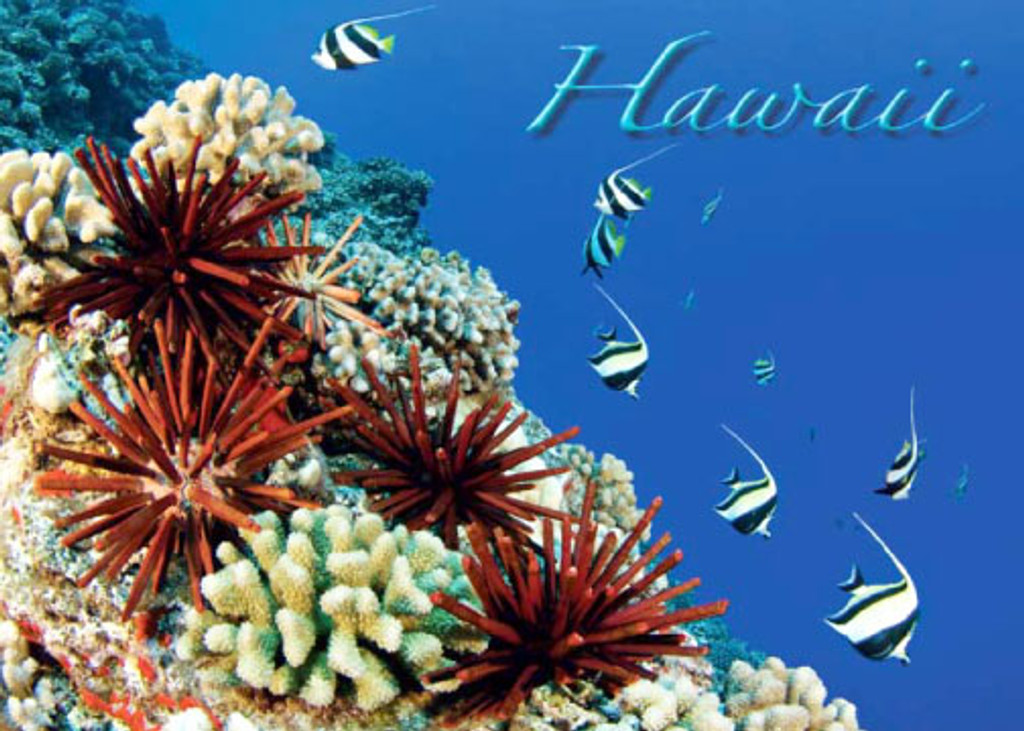Coral and Red Vana 5x7 Postcard 25 Pack