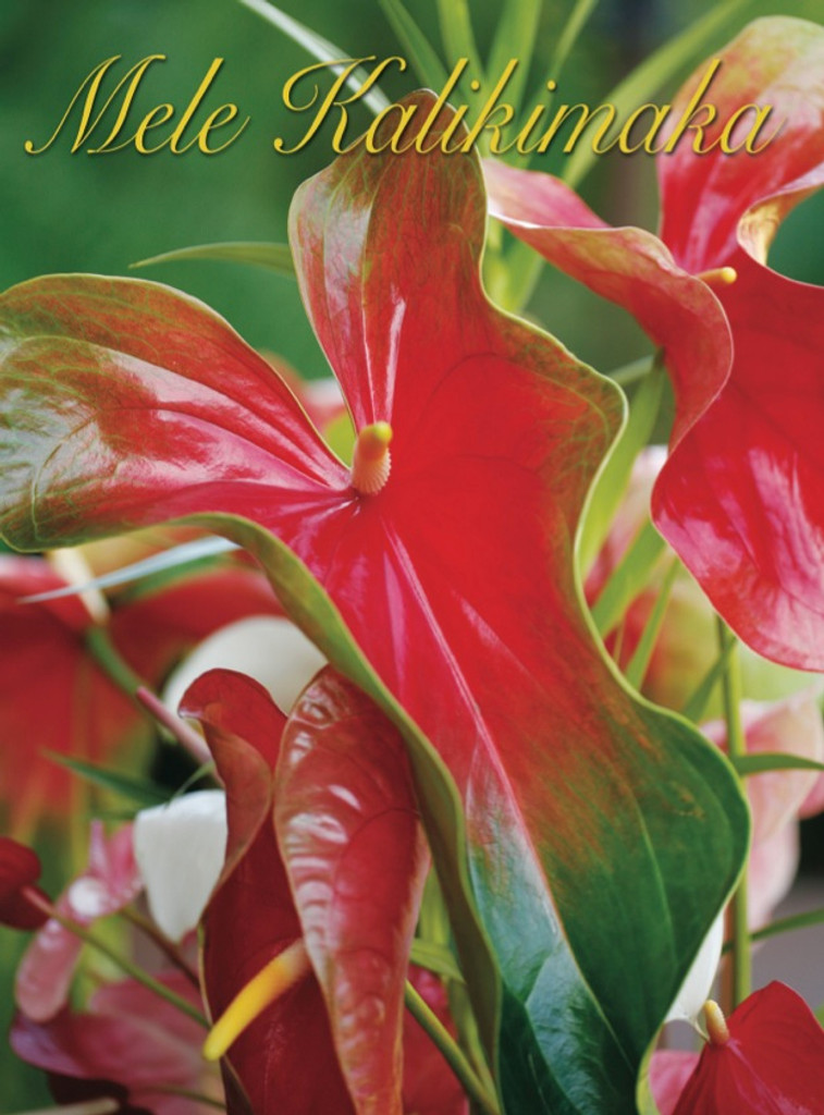 Christmas Cards - Coral Cards - 1036 - Christmas/anthuriums / 10 cards per box