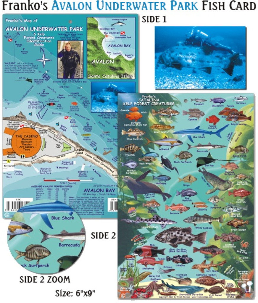 Avalon Underwater Park & Kelp Forest Creatures (fish card)