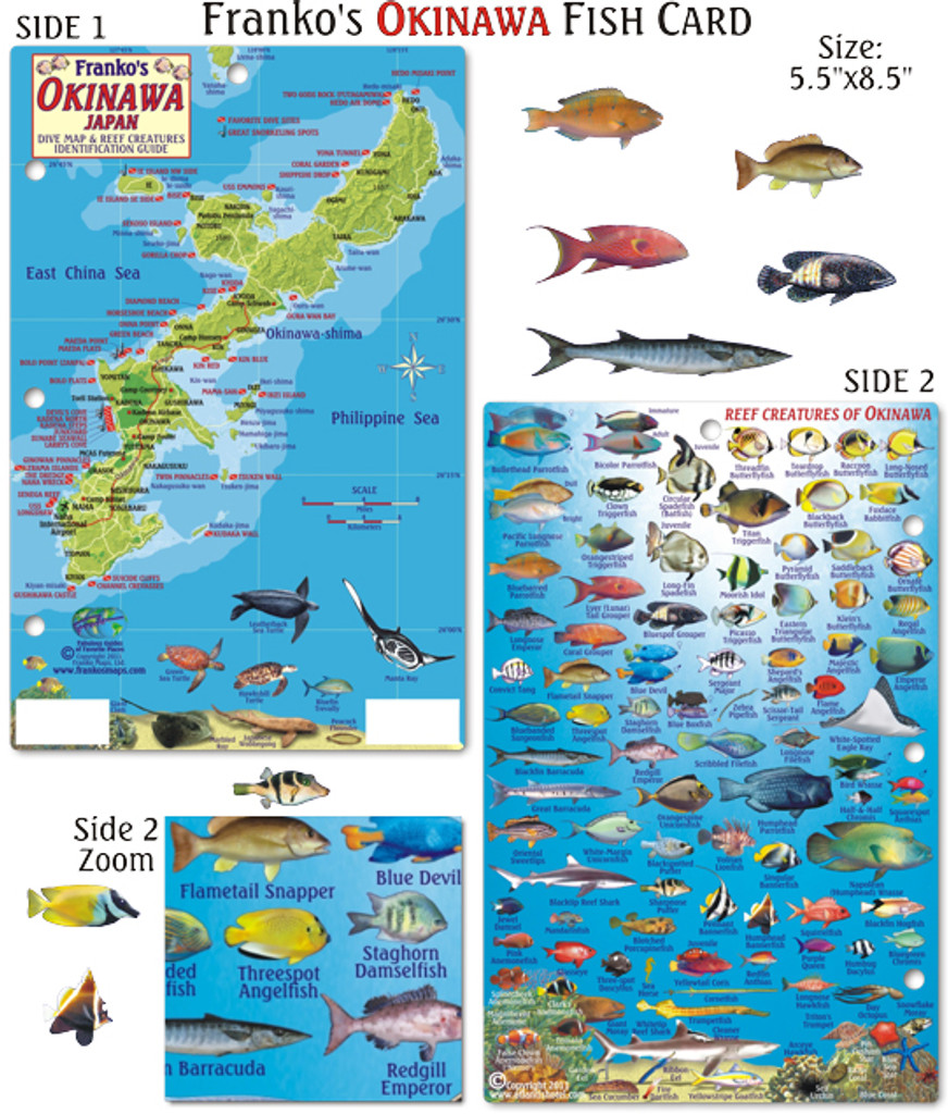 Okinawa Fish Card
