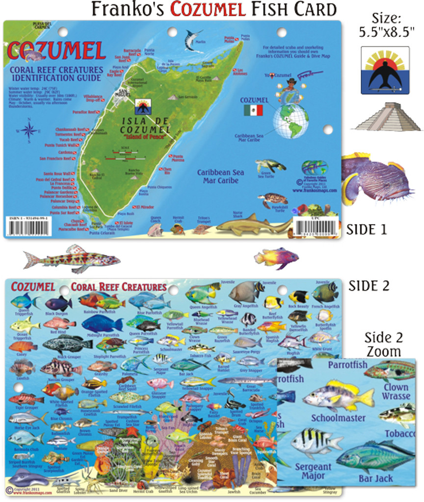 Cozumel Reef Creatures ID Card