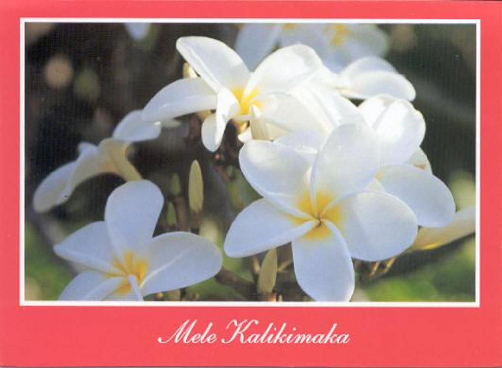 Christmas Cards - Coral Cards Floral - 1001 / White plumeria / 10 cards per box