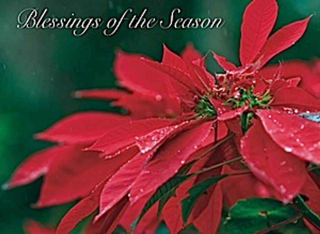 Christmas Cards - Coral Cards - 1038 - Christmas/Poinsettia Dew / 10 cards per box