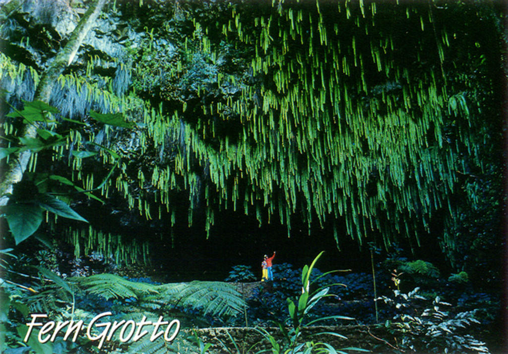 P513 - Fern Grotto Postcard 50 Pack