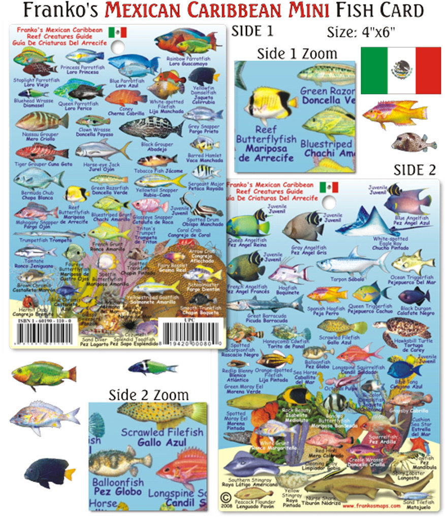 Mexican Caribbean Reef Creatures Guide (Mini Fish Card)