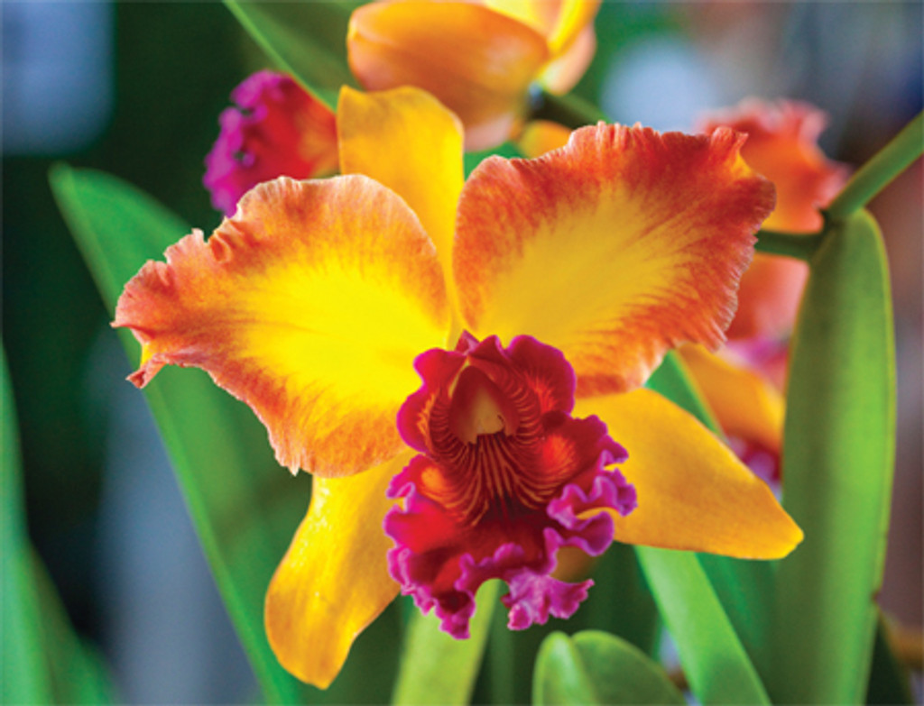 Yellow Orchid notes - Boxed Notecards