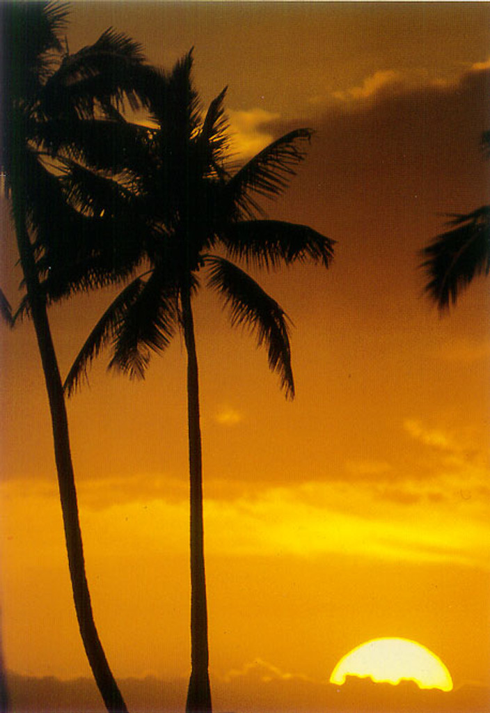 P296 - Sunset Paradise Postcard 50 Pack