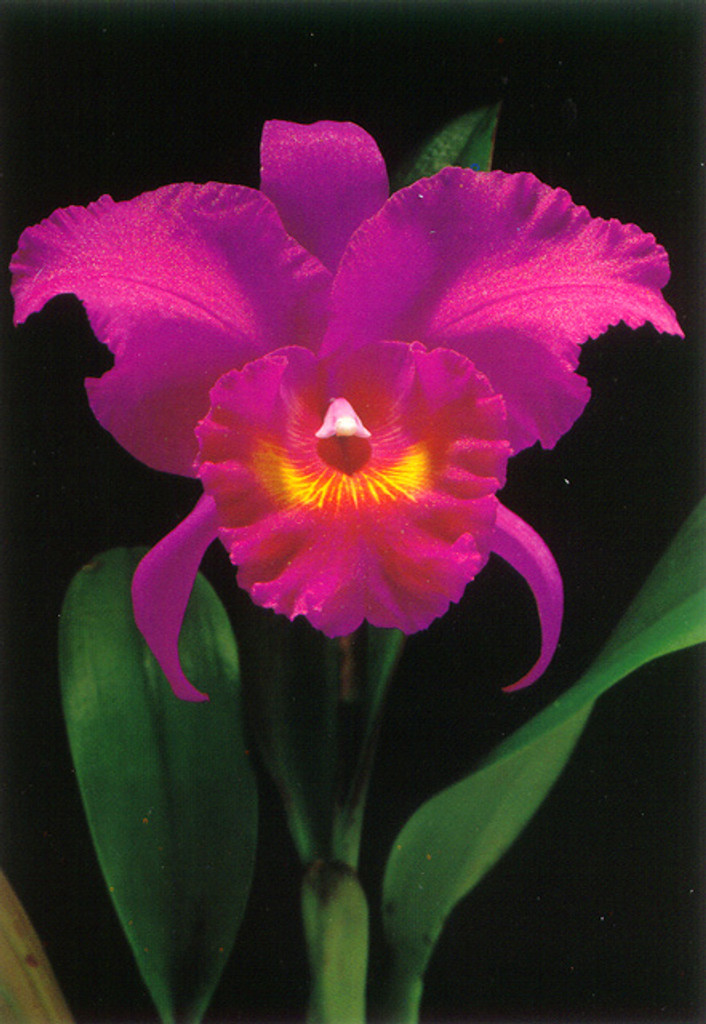 P266 - Orchid Postcard 50 Pack