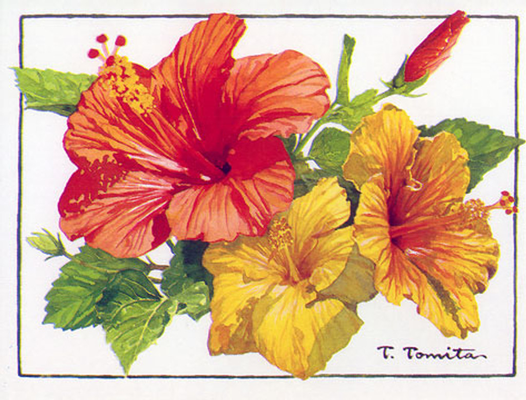 Hibiscus notes - Boxed Notecards