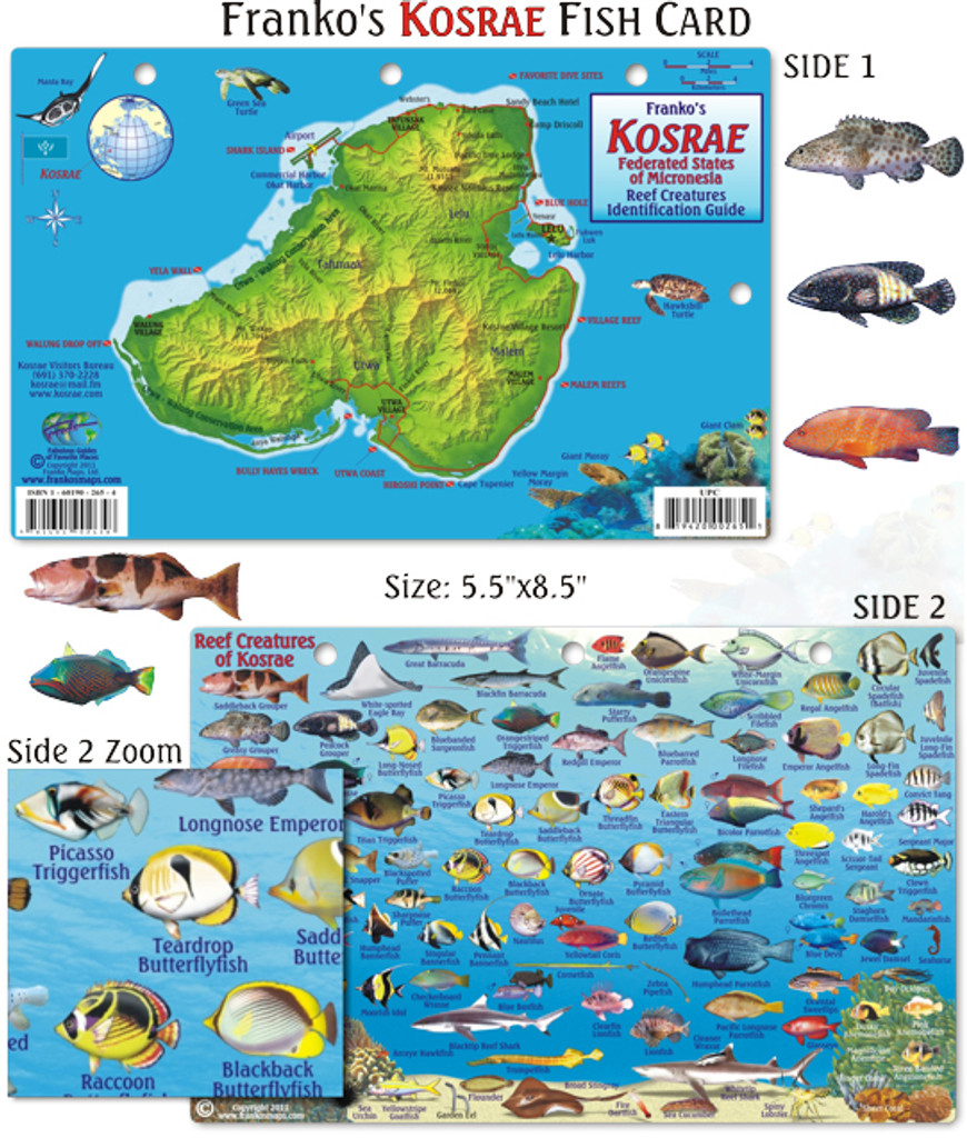 Kosrae Reef Creatures Identification Guide (Fish Card)