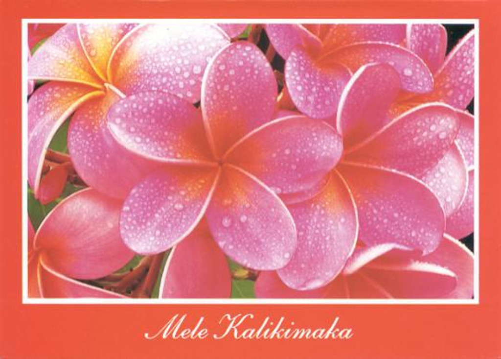 Christmas Cards - Coral Cards Floral - 1024 / Pink plumeria / 10 cards per box