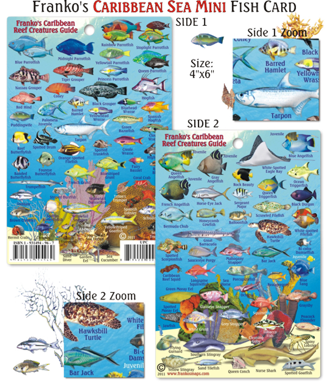 Caribbean reef creatures guide mini caribbean fish card for Mail order fish