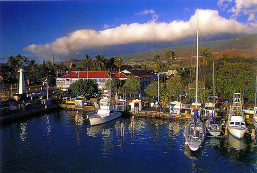 P360 - Lahaina Harbor Postcard 50 Pack