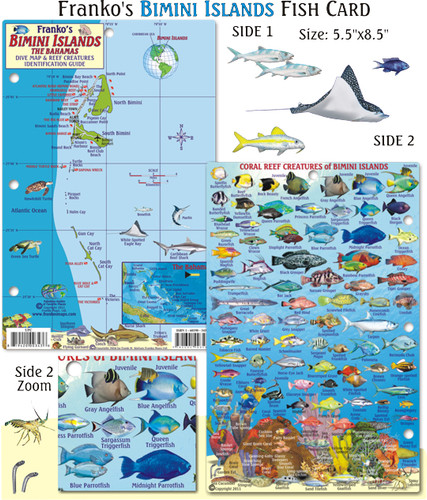 Bimini Islands Fish Card