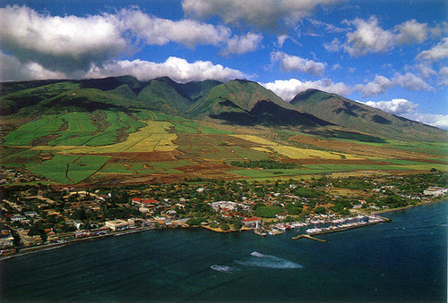 P353 - Lahaina Harbor Postcard 50 Pack