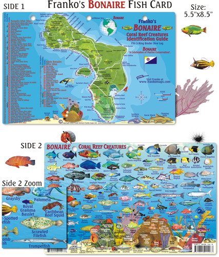 Bonaire Reef Creatures Identification Guide (Fish Card)