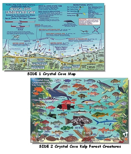 Crystal Cove Underwater Park & Kelp Forest Creatures Identification Card