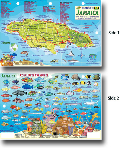 Jamaica Dive and Reef Creatures Card