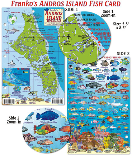 Andros Island Fish Card