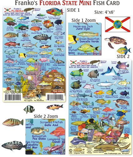 Mini Florida Fish Card