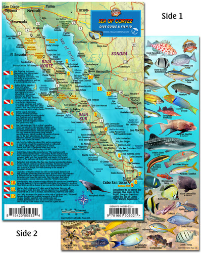 Baja & Sea of Cortez Dive Guide & Fish ID
