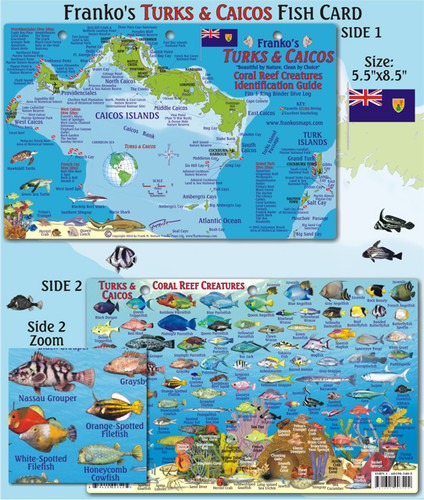 Turks & Caicos Reef Creatures Identification Guide (Fish Card)